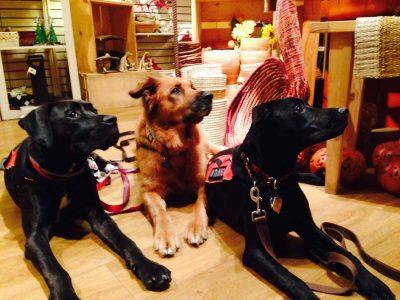 Service Dog Placement Program