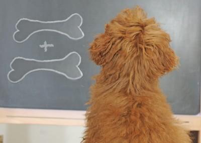 dogschool-study-800web