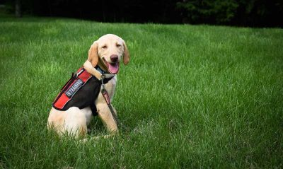 Service Dog Placement Service