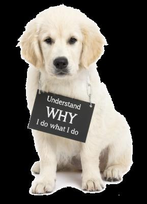 understand-why