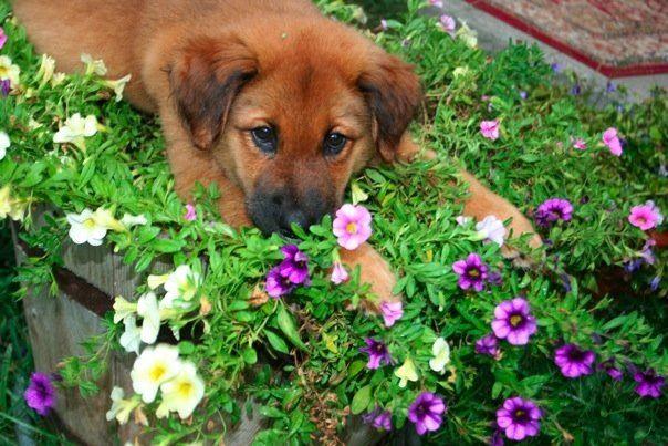 Kiwi Flower & Puppy Pics - 12