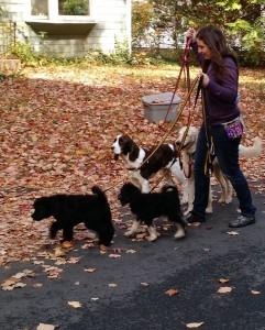 walking4dogs